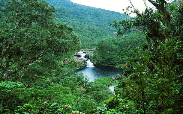 「奄美大島、徳之島、沖縄島北部及び西表島」の西表島マリュード滝
