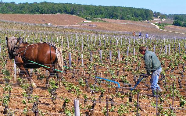 フランスの世界遺産「ブルゴーニュのブドウ畑のクリマ」、ロマネ・コンティのクリマ