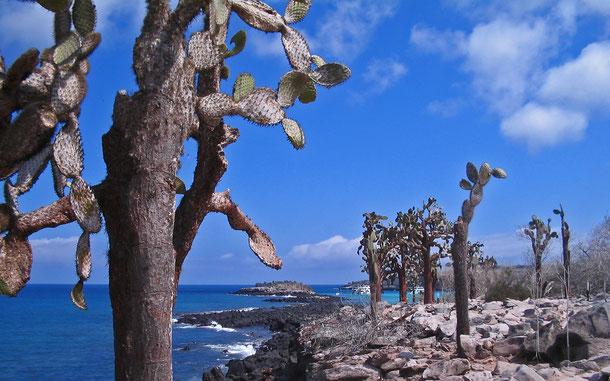 世界遺産「ガラパゴス諸島(エクアドル)」のガラパゴスウチワサボテン