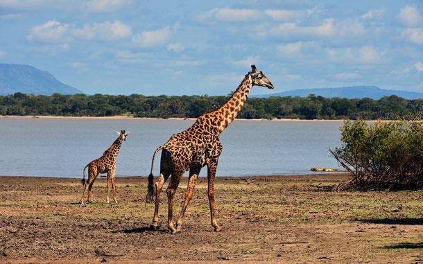 タンザニアの世界遺産「セルー・ゲーム・リザーブ」