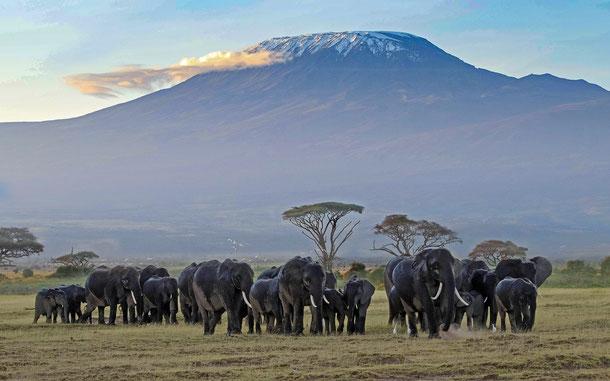世界遺産「キリマンジャロ国立公園(タンザニア)」