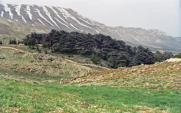 世界遺産「カディーシャ渓谷[聖なる谷]と神のスギの森[ホルシュ・アルツ・エル-ラーブ](レバノン)」