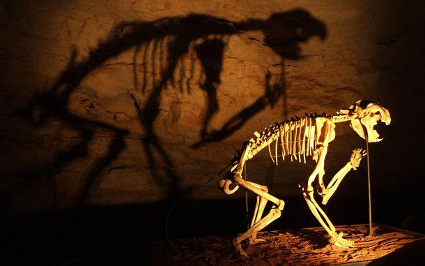 世界遺産「オーストラリアの哺乳類化石地域[リヴァーズレー/ナラコーテ](オーストラリア)」、ナラコーアテ・ケーブ国立公園のティラコレオ