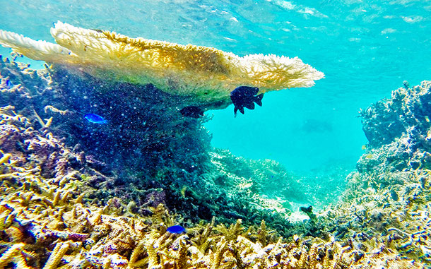 西表島の珊瑚礁