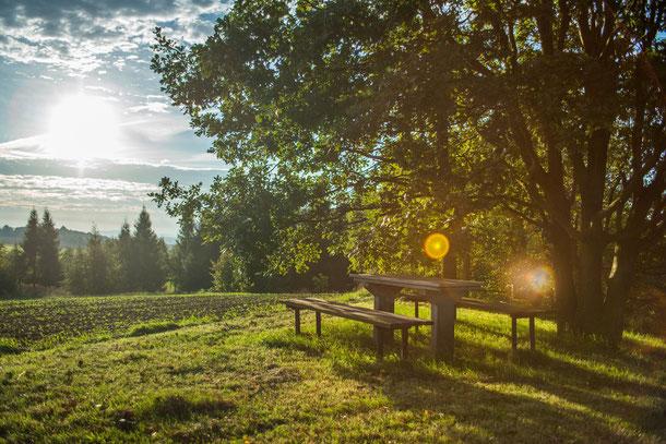 Umlaufbild der Kategorie Fit for Leadership Führungskräftetraining - einsame Parkbank in Wald und Wiese