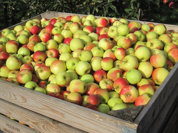 Aktionstag: Äpfel - Apfelsaft - Apfelkuchen