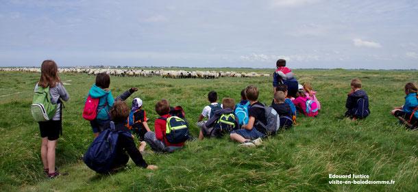 voyage scolaire en baie de Somme