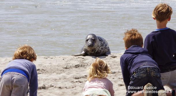 Comment voir les phoques en baie de Somme ?
