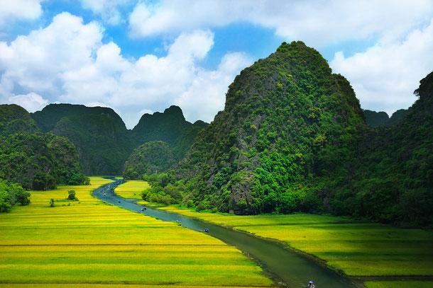 Vietnam hat für den aufmerksamen Touristen unzählige Naturwunder zu bieten. Auf diesem Bild sehen Reisfelder im Mekong Delta.