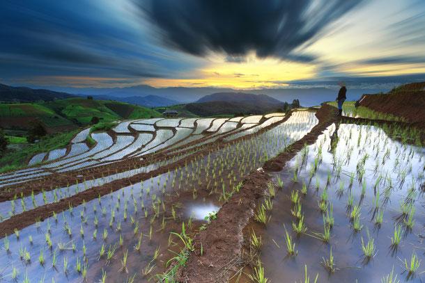 Die in Stufen angelegten  Reisterrassen von Sapa sind Touristenattraktion und Hauptnahrungsquelle der Menschen in Nordvietnam zugleich