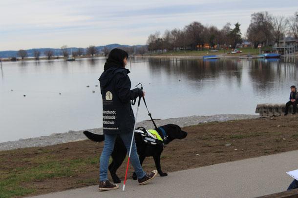 Hunde im Wald, Assistenzhundezentrum Vorarlberg, zertifizierte Therapiebgleithunde