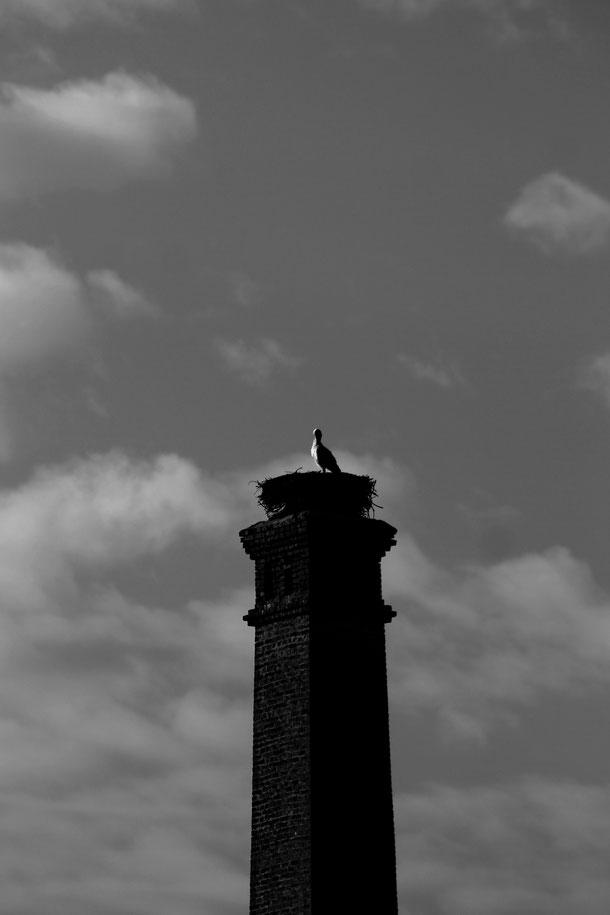 Storch in Florstadt-Staden (2015)
