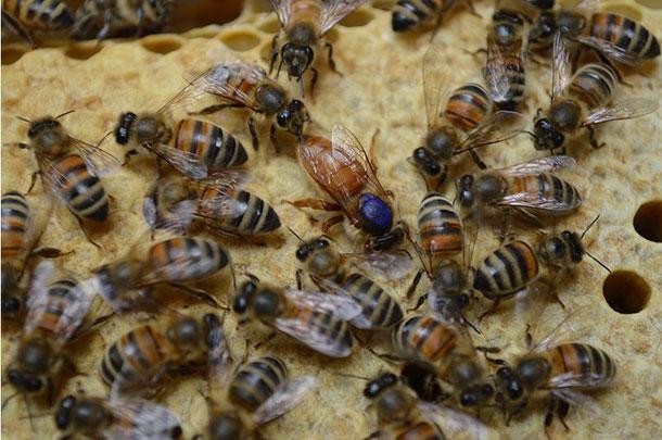 числа день куплю пчелку электро в усть каменогорске сеть кинотеатров Интеркино
