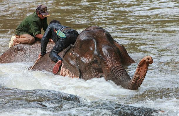 Mahouts baden Ihre Elefanten, Mondulkiri