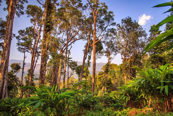 Die Kardamomberge oder auch Chuor Phnom Krâvanh genannt, sind eines der schönsten und größten Naturschutzgebiete in Kambodscha.