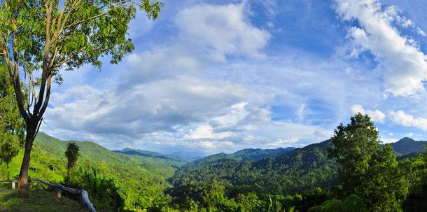 Der Kambodschanische Dschungel ist ein Risikogebiet für die Japanische Enzephalitis