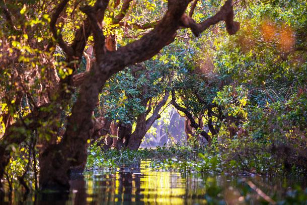 Die Umgebung des Tonle Sap Sees beherbergt ein einzigartiges Ökosystem, welches unbedingt geschützt werden muss.