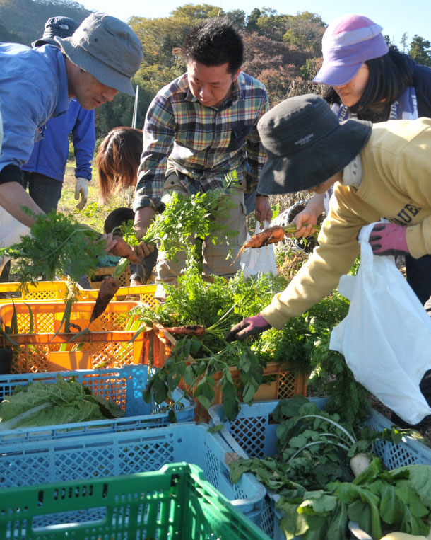 自然栽培の野菜の収穫風景(さとやま農学校2018の写真です)