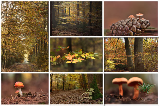 647. Herfst collage Speulderbos