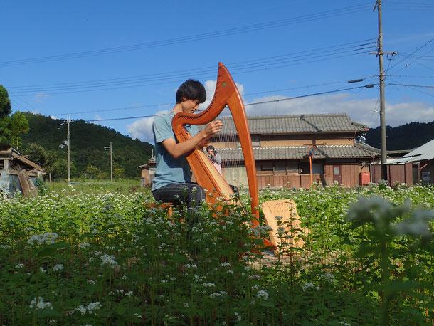 蕎麦畑でアイリッシュハープの演奏会