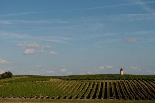Vue des vignobles du Lot et Garonne