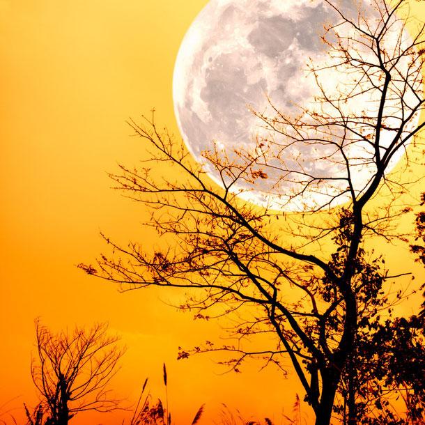 Les bénéfices de la lune sur notre quotidien.