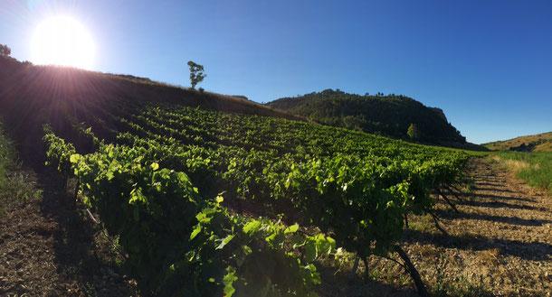 salvatore tamburello vini azienda agricola biologica poggioreale