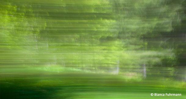 Gruen 2  - Fotografie - (c) Bianca Fuhrmann - www.bianca-fahrmann-art.com   #bianca_fuhrmann_art