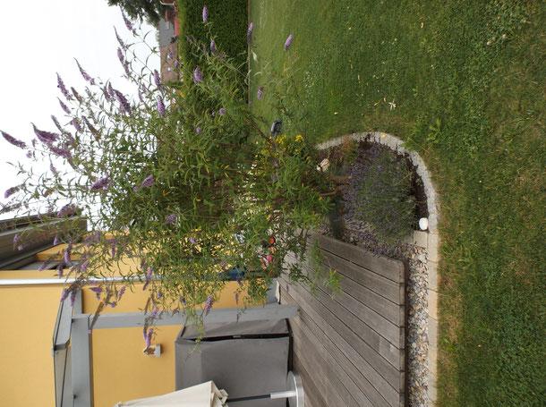 Einfassung Betonsteine der Terrasse, Beeteinfassungen.