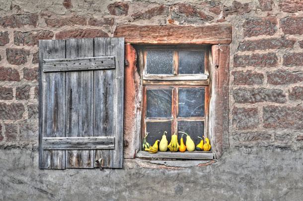 Kürbisfenster