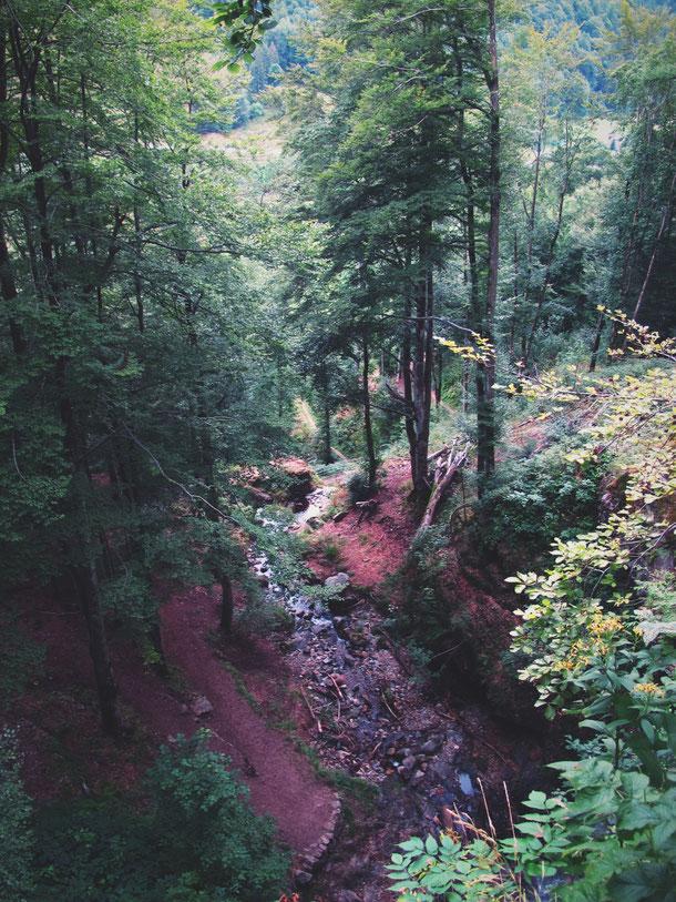bigousteppes allemagne forêt noire