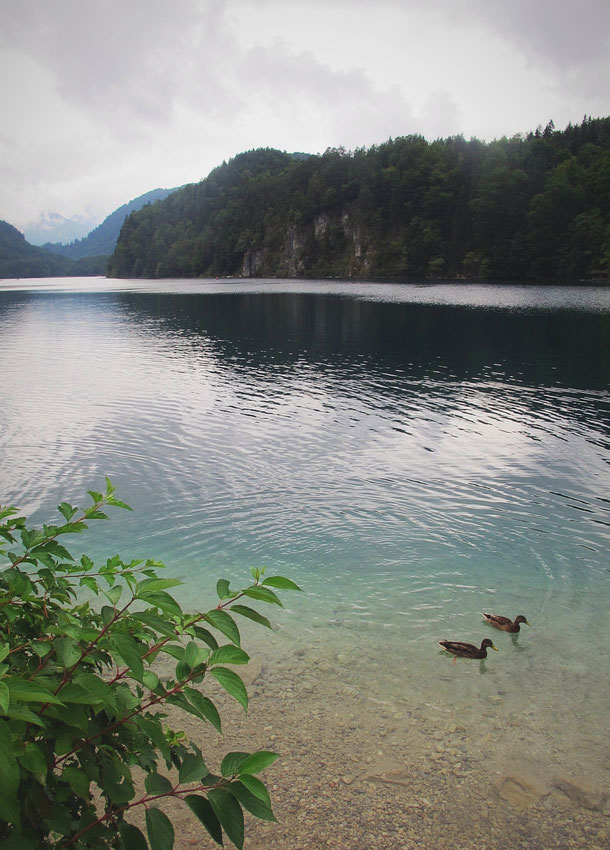 bavière allemagne lac alpsee canard eau emeraude forêt montagne
