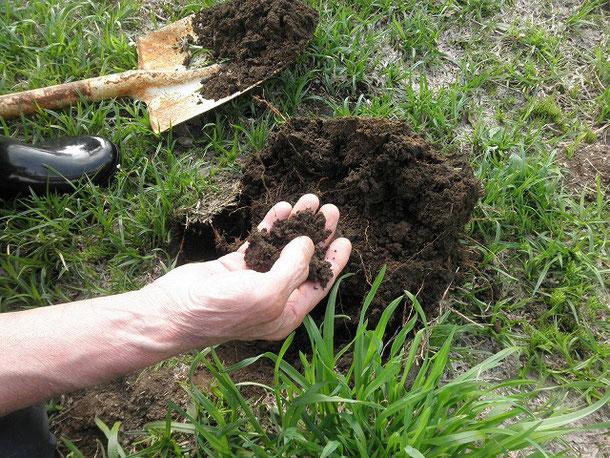 だんだんいい土になってきました