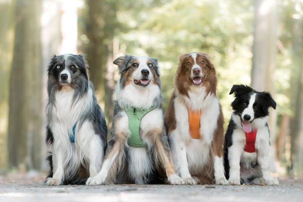 Hondentraining, volwassenhond, gedragsdeskundige, dog-coach, privé les