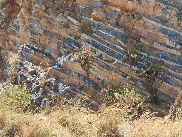 weitere, sehr gut sichtbare Gesteinsschichten, die nicht horizontal, sondern schräg nach oben verlaufen, weil sie hochgedrückt wurden