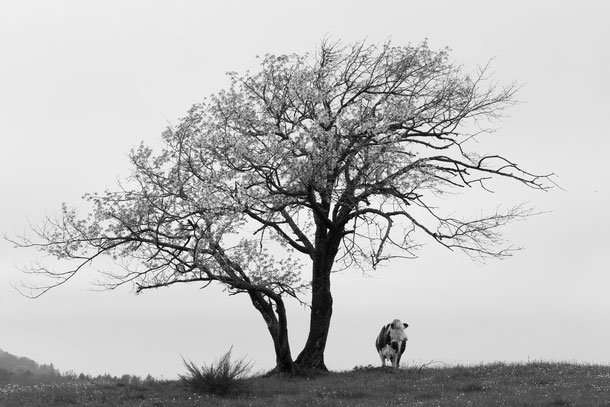 Photo: Fabien GEILER