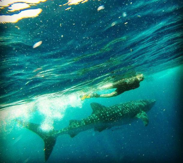Tauchen, Tauchsport, Ägypten, unter Wasser, Dive, 2014, Zwei auf Achse