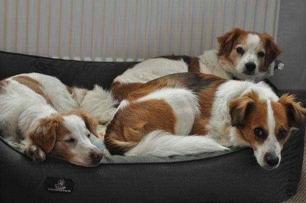 Drei Kromis  in einem Bett