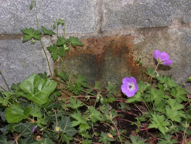 Bild: Rostausblühungen an Granitmauerstein