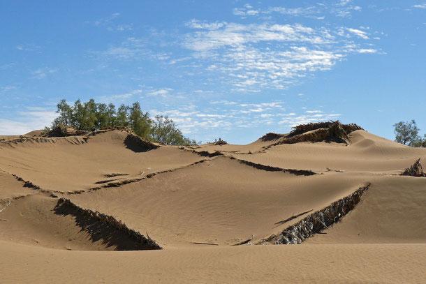 Sanddünenbefestigungen vor und um die Ortschaft Mhamid (1,5 Km vor der Grenze zu Algerien) die von der Versandung durch die Sahara bedroht ist.