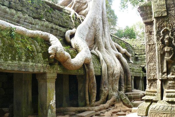 """Teilansicht Ta Prohm """"Tempel von Brahma dem Ahnen"""" 1186 erbaut duch König Jayavarman VII."""
