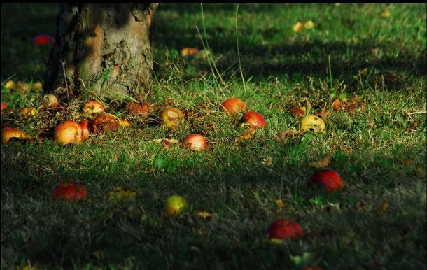 Äpfel kann man sammeln und zur Mosterei bringen.Für Apfelsaft