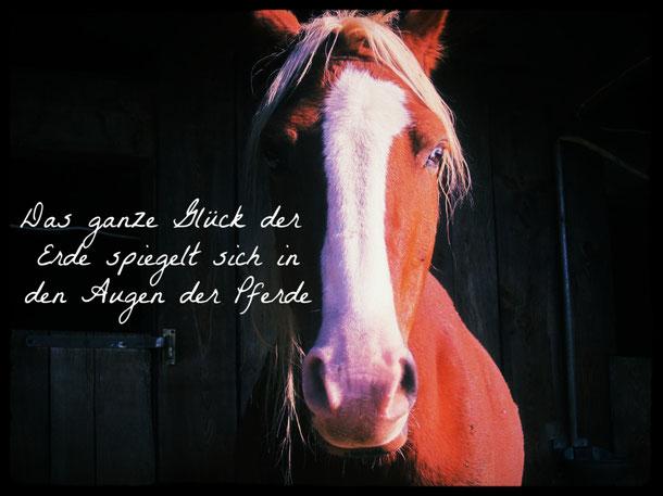 sprüche pferde