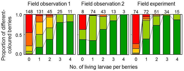 Figure 4.  Relationship between tne number of living larvae per berries and the berry colour in winter.