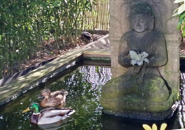 Nach der Umgestaltung - Besuch von einem neugierigen Entenpaar