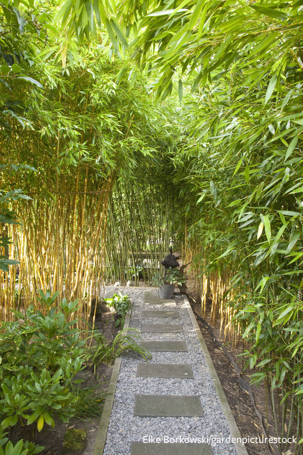 Durch das Tempeltor hindurch führt ein kleiner Rundweg durch einen üppigen Bambushain