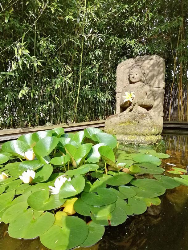 Heute akzentuieren üppige Seerosen das Buddha-Relief im Teichbecken
