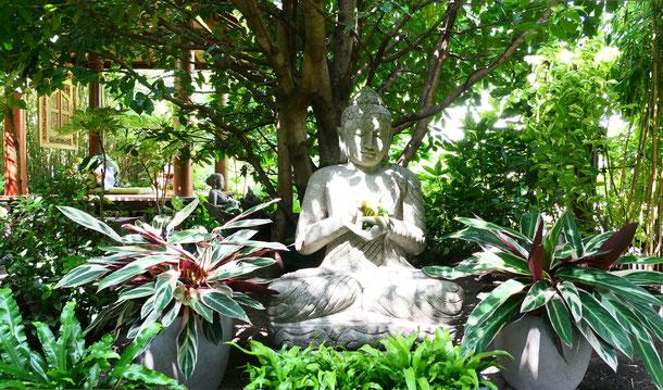 schwerer Buddha unter wuchsfreudigem portugiesischem Lorbeerbaum