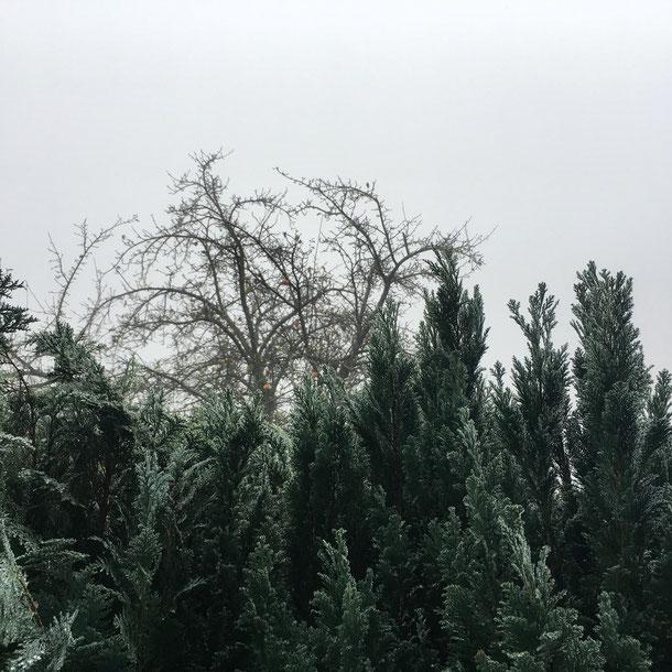 grau Nebel November Bild