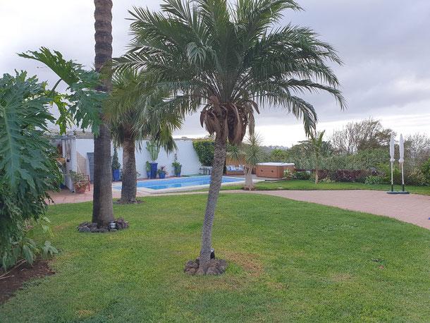 Großer Palmengarten mit Pool im Hintergrund und viel Rasenflächen im Bild.